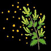 花粉症(ブタクサ