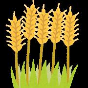 花粉症(麦