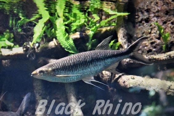 アポロシャーク01 サンシャイン水族館