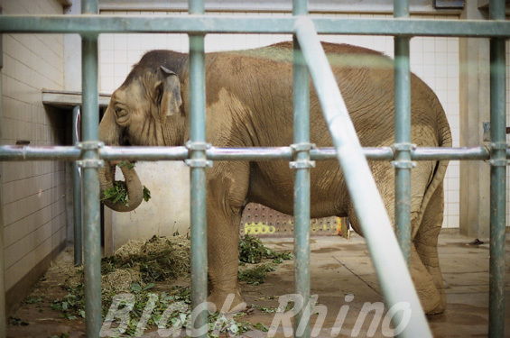 インドゾウ 美代04 浜松市動物園
