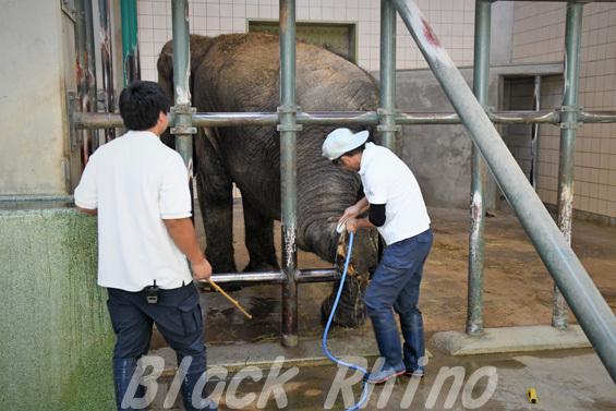 インドゾウ 浜子06 浜松市動物園