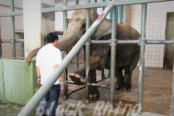 インドゾウ 浜子08 浜松市動物園