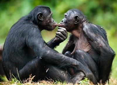 bonobos[1]