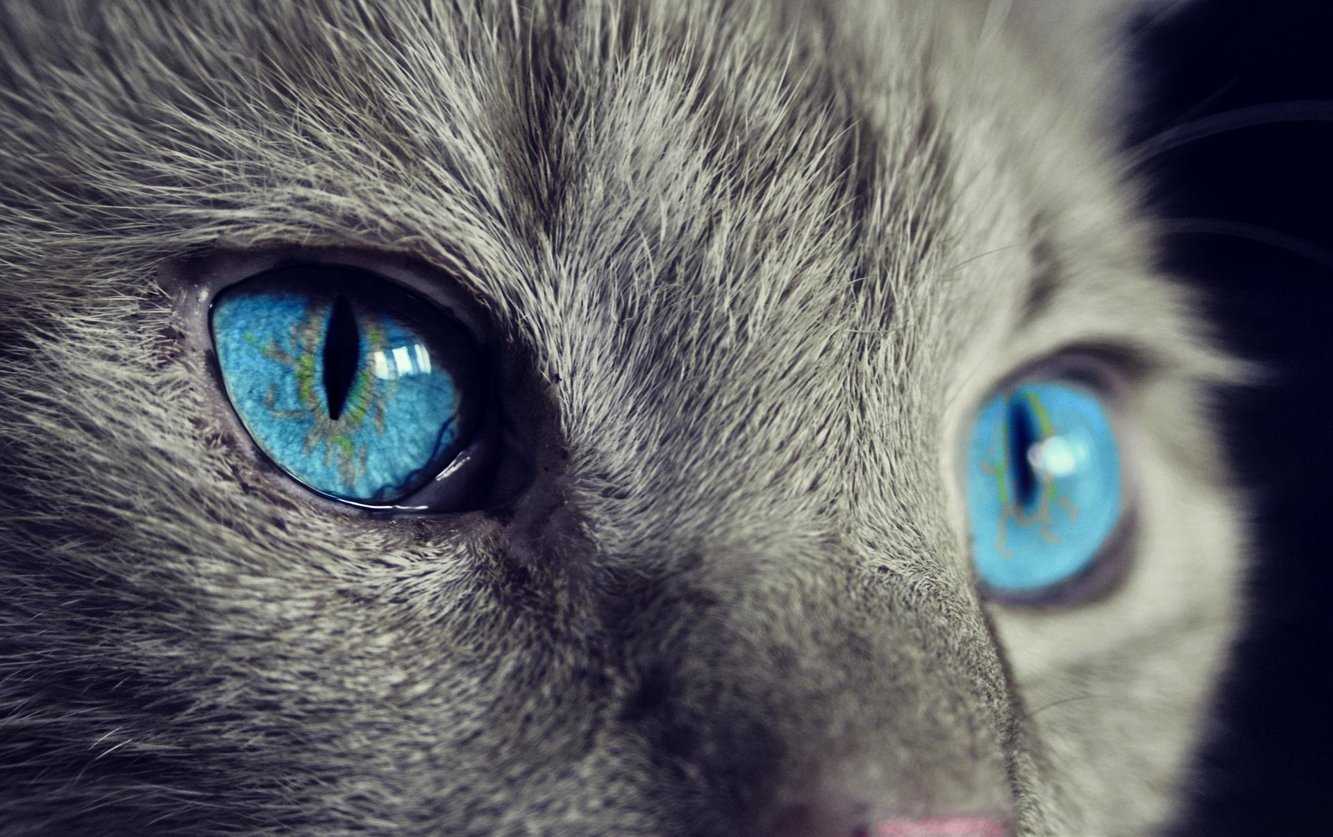 cat-1285634_1920.png