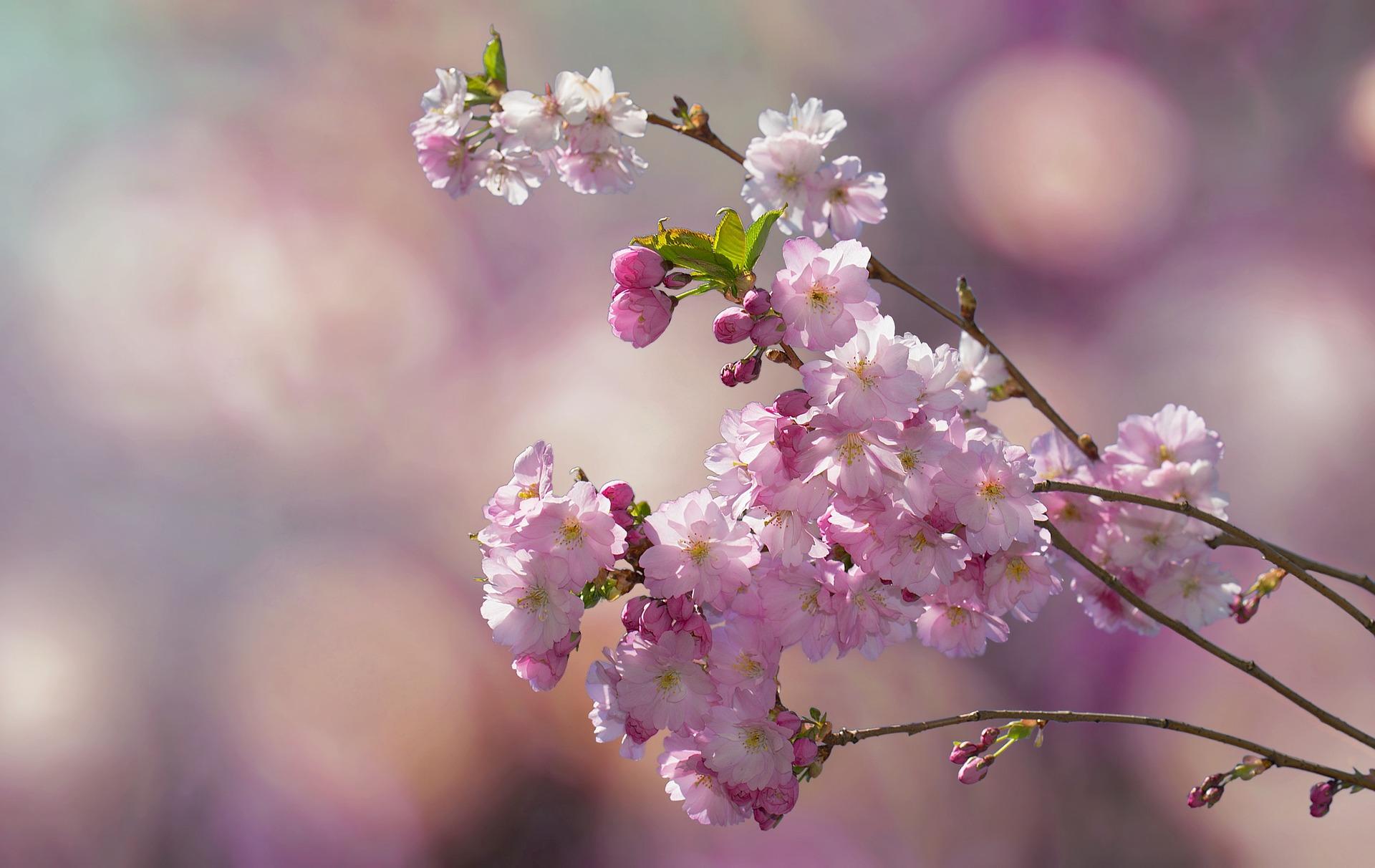 flowering-twig-2057360_1920.jpg