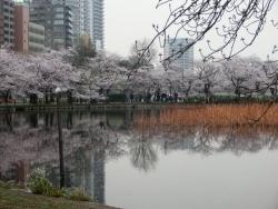 上野公園 不忍池 2018