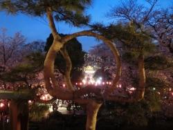 上野公園 月の松 2018