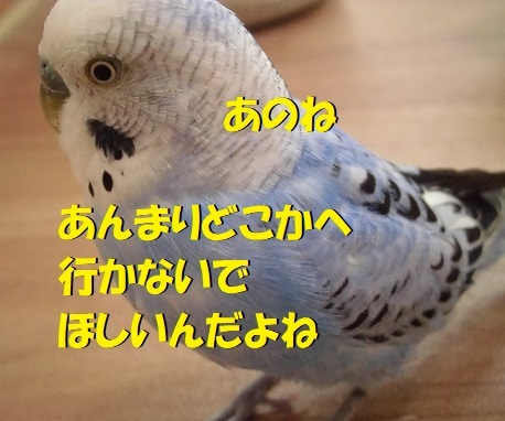CIMG1805.jpg