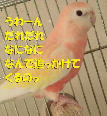 CIMG1823.jpg