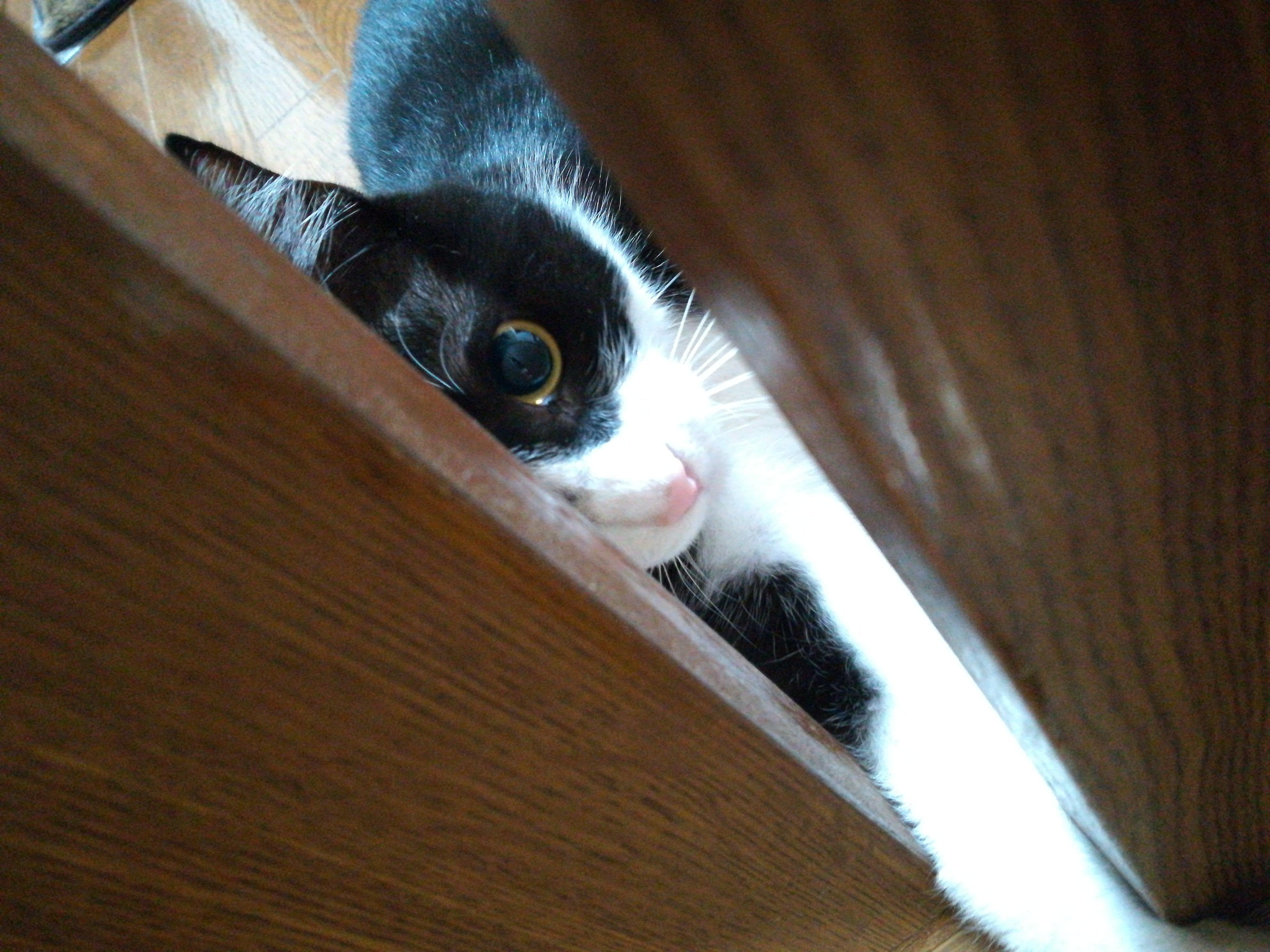 20180622 『地域猫活動セミナー』のご案内川崎市サポーター制度説明会