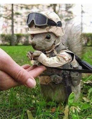 リスの兵隊さん