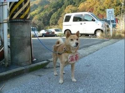 駐車場で満車の札をかけた犬