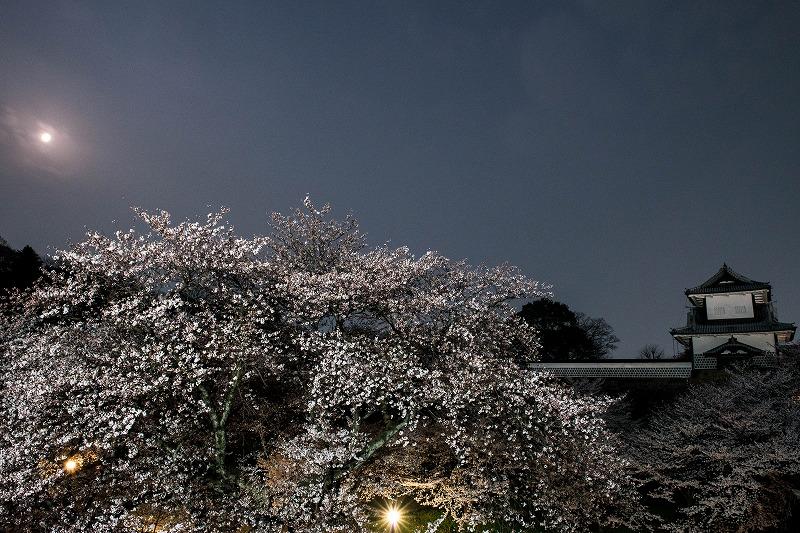 2018.04.02 金沢城 夜桜 11