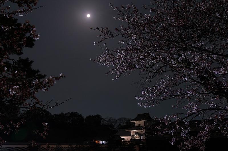 2018.04.02 金沢城 夜桜 9