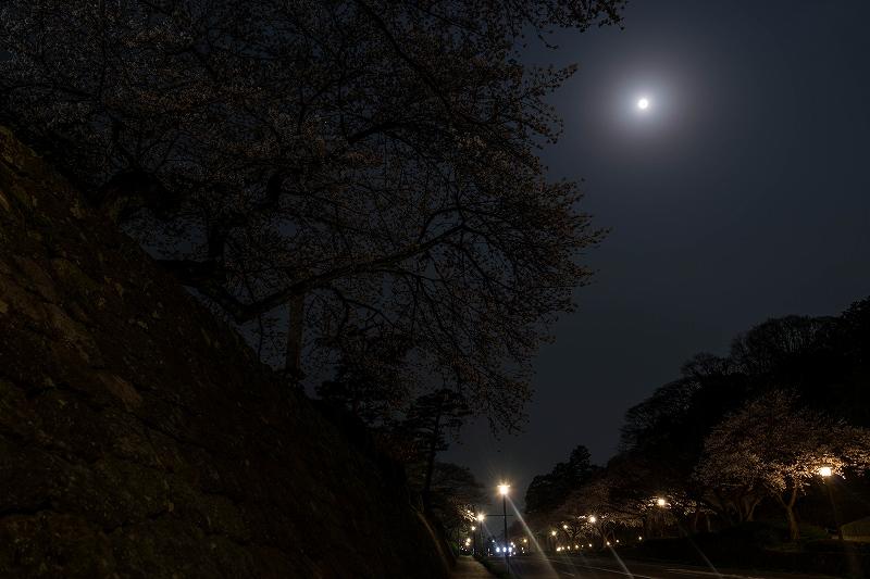 2018.04.02 金沢城 夜桜 5