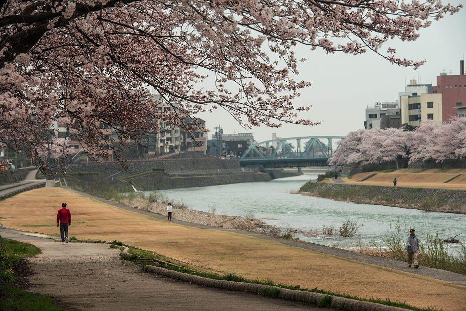 2018.04.02 犀川 桜並木 5