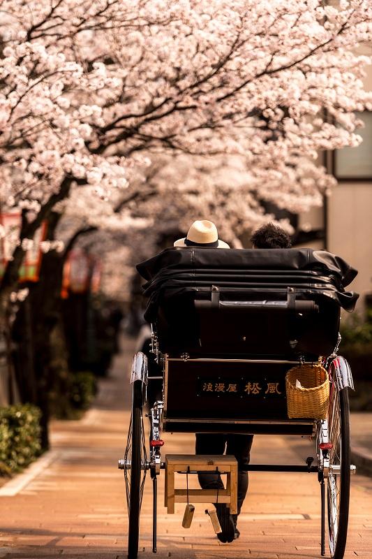 2018.04.02 主計町の桜 5