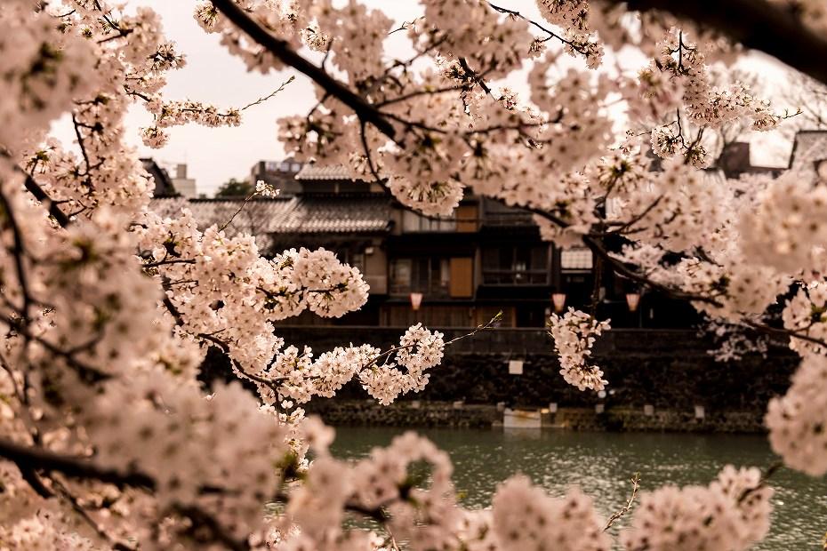 2018.04.02 主計町の桜 2