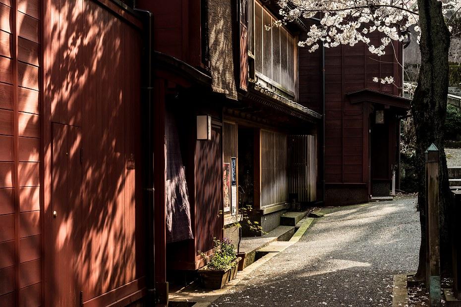 2018.04.02 主計町の桜 3