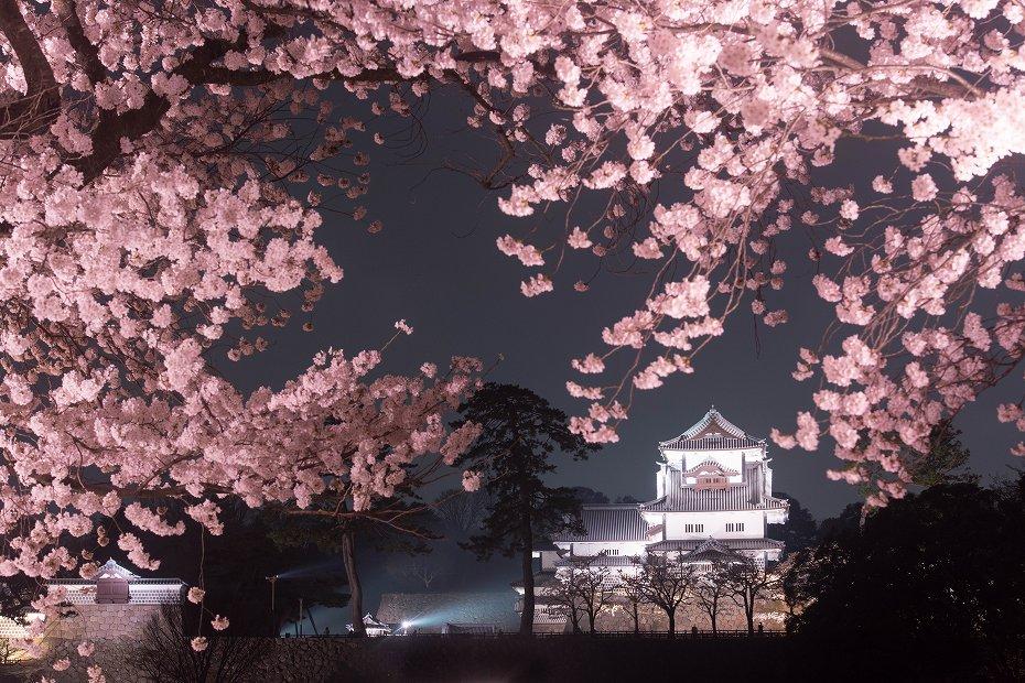 2018.04.03 金沢城 夜桜 14
