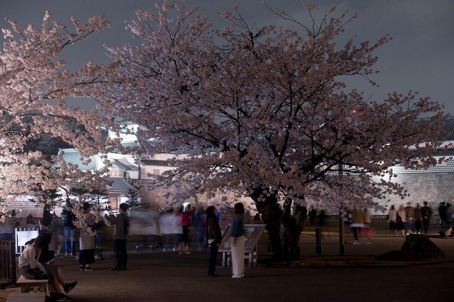 2018.04.03 金沢城 夜桜 12