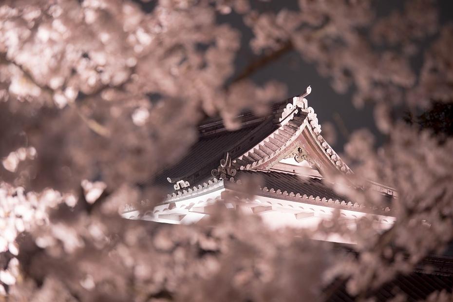 2018.04.03 金沢城 夜桜 10