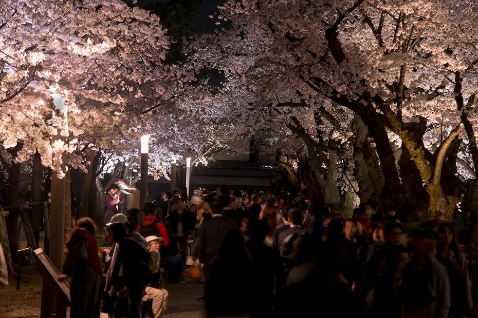 2018.04.03 金沢城 夜桜 8