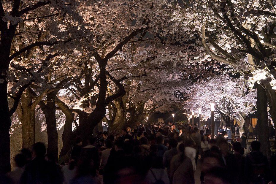 2018.04.03 金沢城 夜桜 9