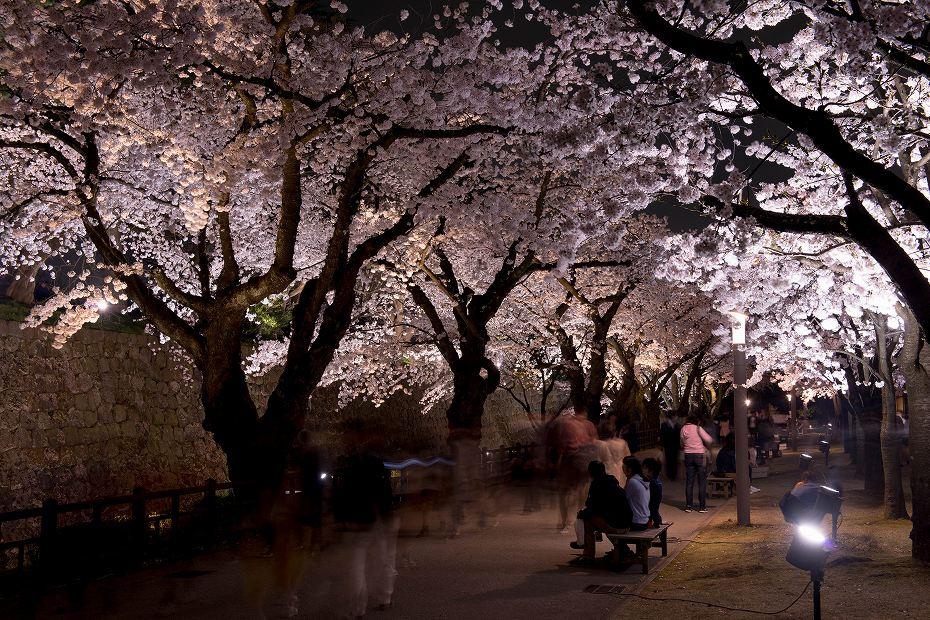 2018.04.03 金沢城 夜桜 7