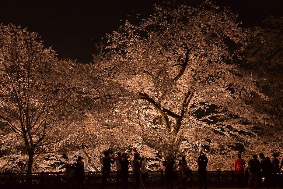 2018.04.03 金沢城 夜桜 6