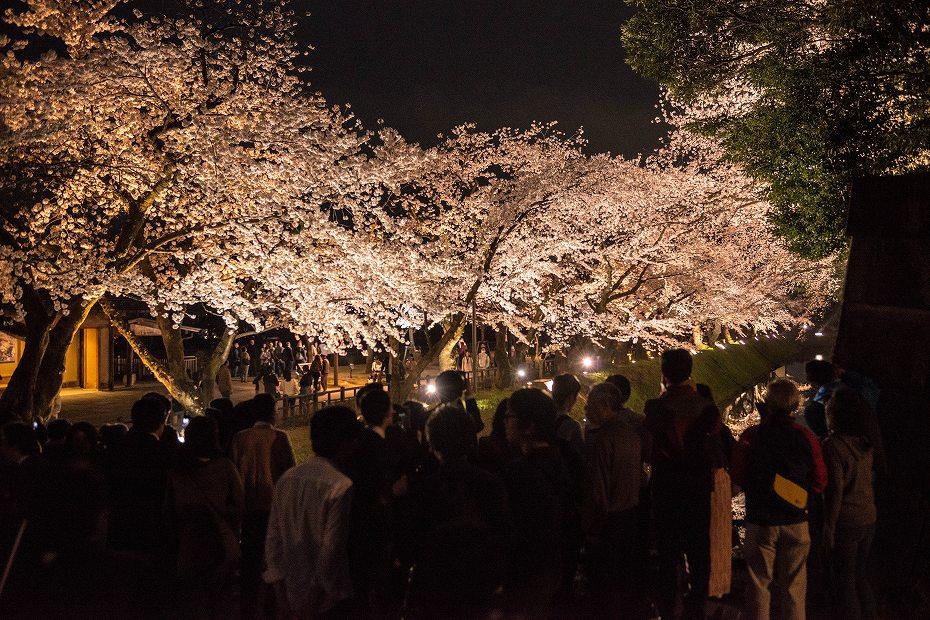 2018.04.03 金沢城 夜桜 4
