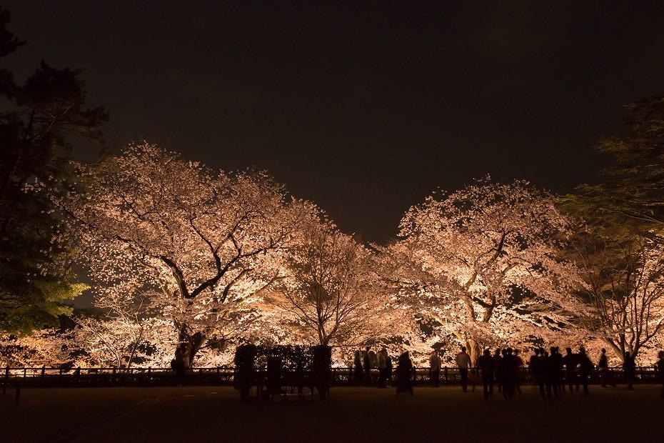 2018.04.03 金沢城 夜桜 5