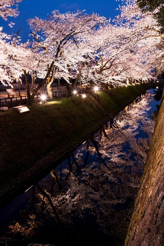 2018.04.03 金沢城 夜桜 2