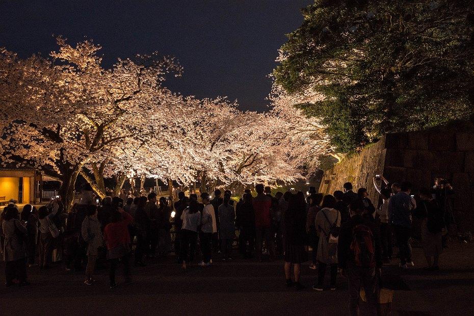 2018.04.03 金沢城 夜桜 3