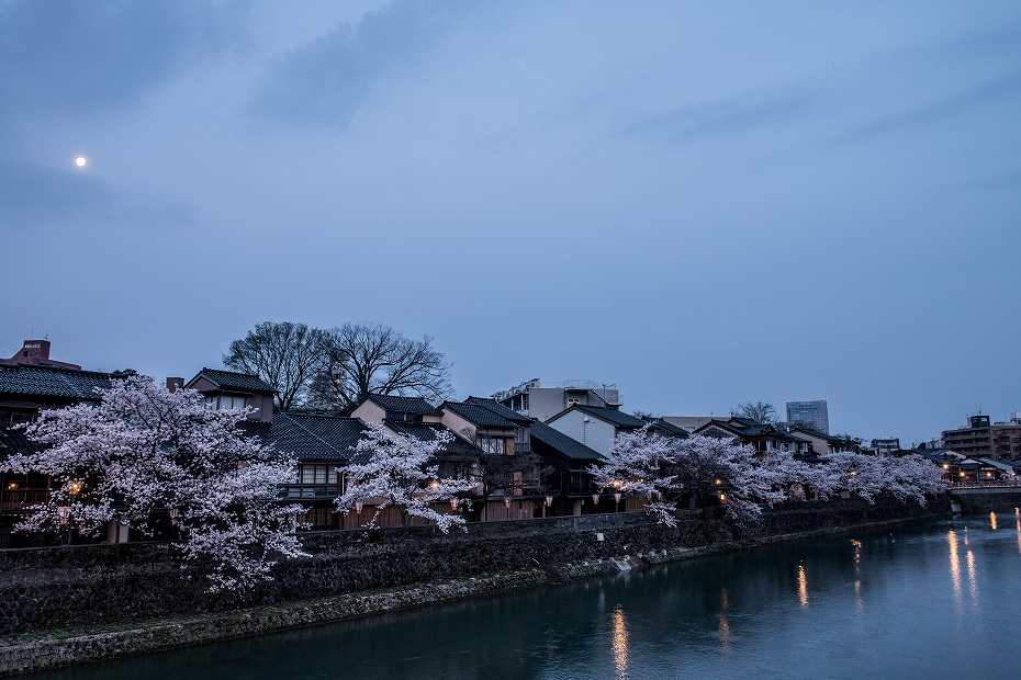 2018.04.03 主計町の夜桜 5