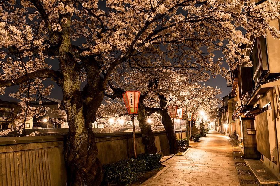2018.04.03 主計町の夜桜 2