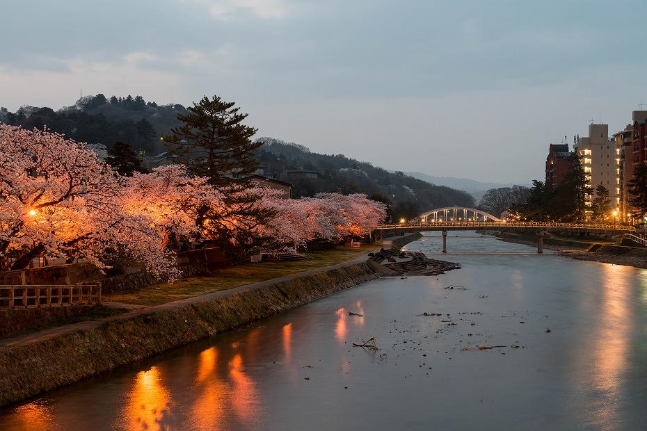 2018.04.03 浅野川 夜桜 3