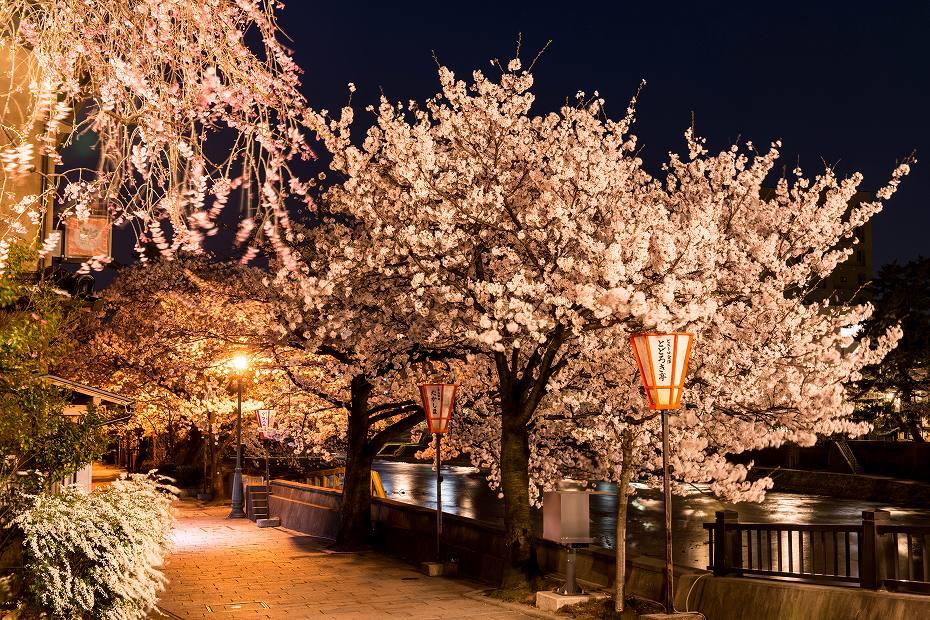 2018.04.03 浅野川 夜桜 2