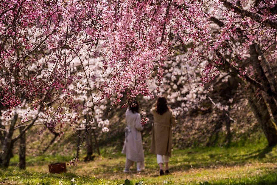 2018.04.05 卯辰山 四百年の森 12