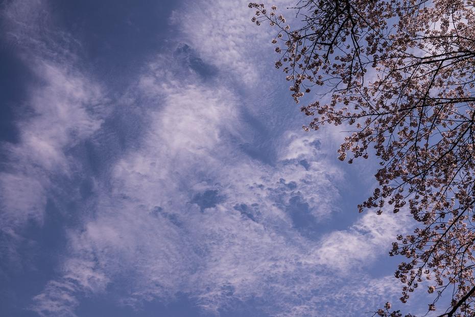 2018.04.05 卯辰山 四百年の森 8
