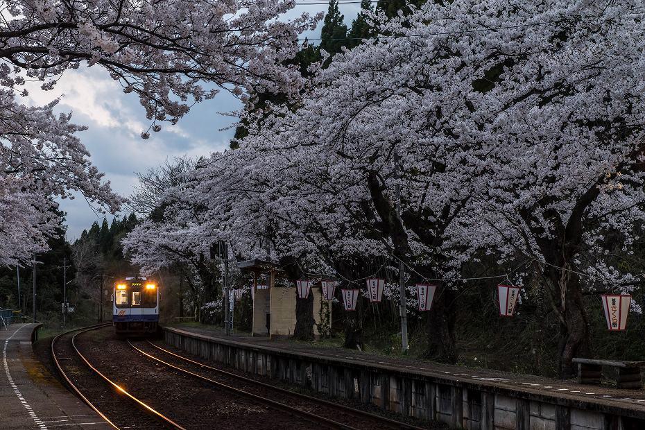 2018.04.08 能登さくら駅 12