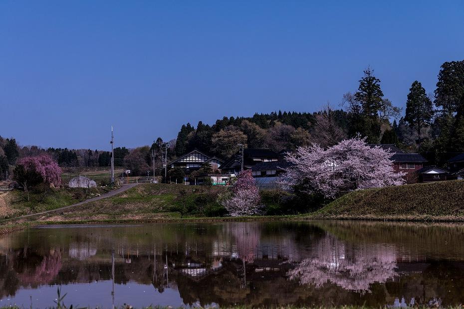 2018.04.10 津幡町 桜 3