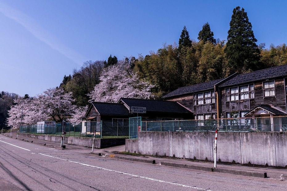 2018.04.10 津幡町 桜 5