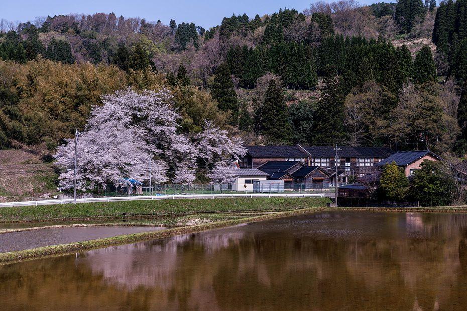 2018.04.10 津幡町 桜 4