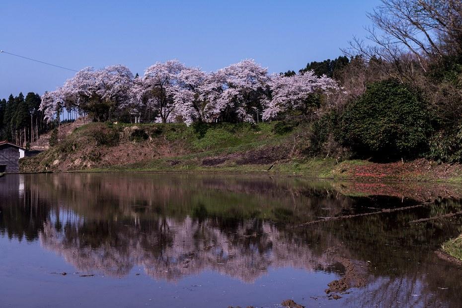 2018.04.10 津幡町 桜 1