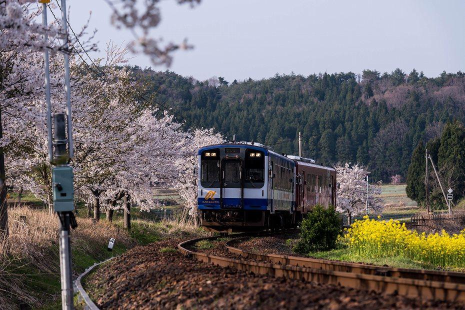 2018.04.10のと鉄道 桜 1