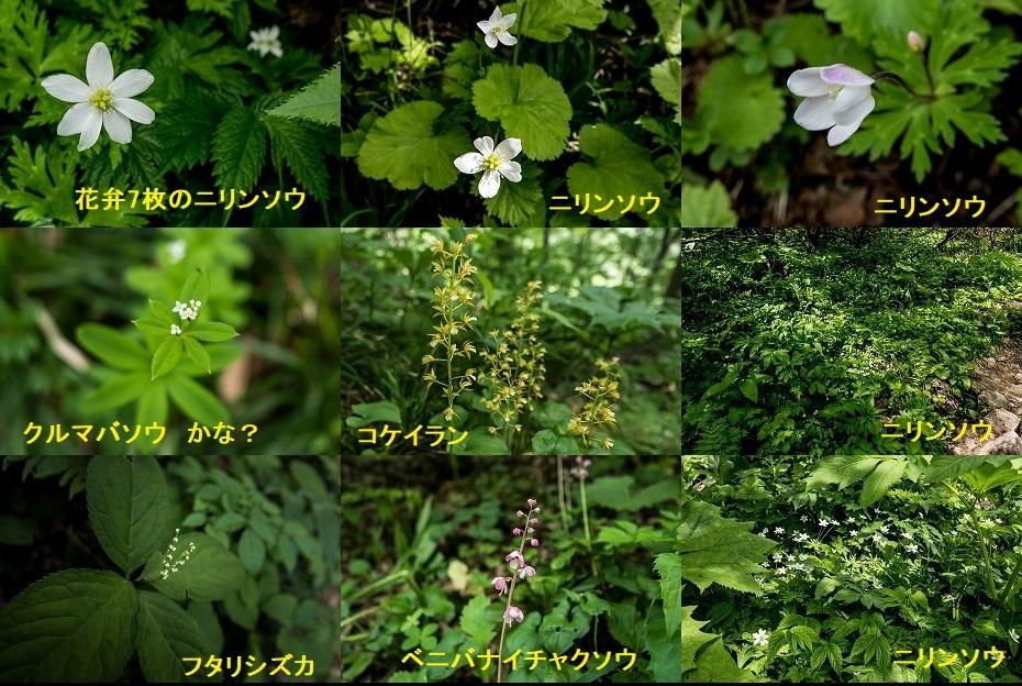 2018.06.22 御前峰 観光新道 3 (23)