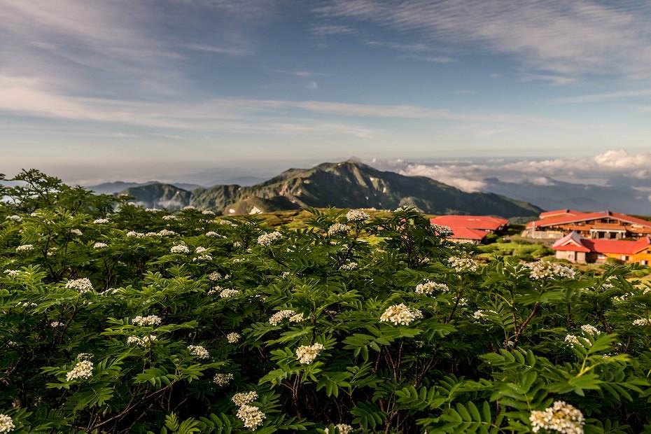 2018.07.11 白山 高山植物 1