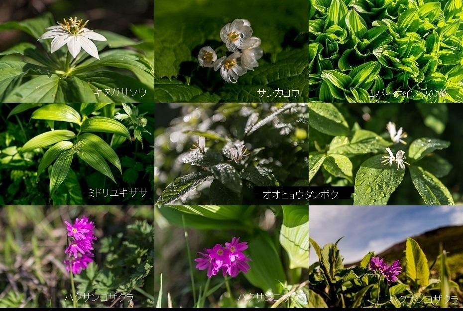 2018.07.11 白山 高山植物 9