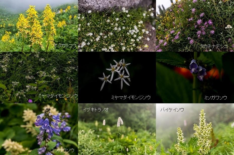 2018.07.23 白山 エコーライン 十二曲り 1 (26.1)